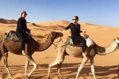 sandy-the-camel